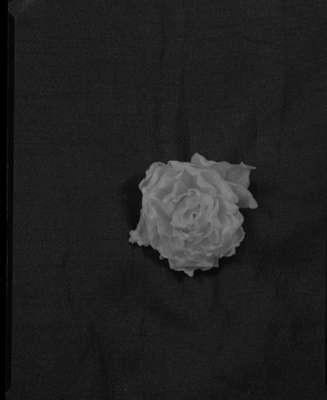 Flower, 1946