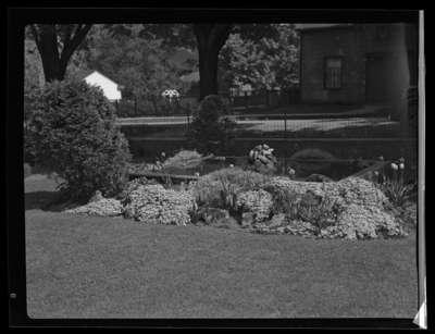 Pringles Garden (Image 1 of 2)