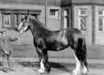 Frank Batty with Maryfield Queen (Clydesdale horse)