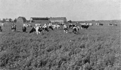 Dairy Herd and Barn, Ontario Hospital Whitby, 1934