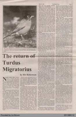 The Return of Turdus Migratorius by Mel Robertson, from The Burford Times