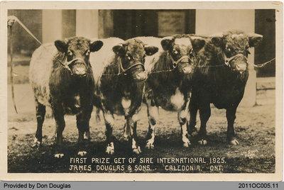 Livestock of James Douglas & Sons