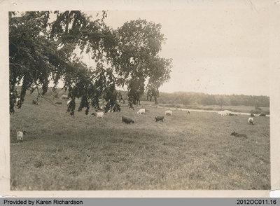 Willowbank Farm Scene