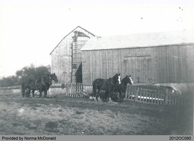 Barns on the Hamilton Farm