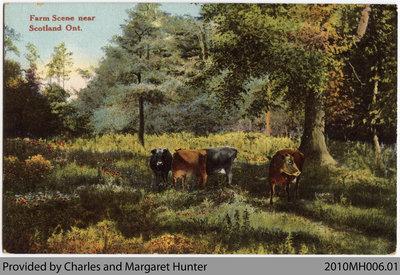 Farm Scene Postcard, Scotland, Ontario