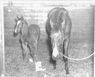 LH0507 Horse Racing- Foal