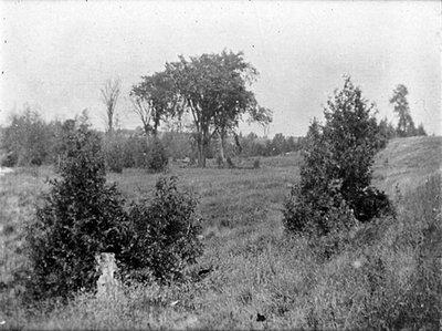 LH0734 Landscape