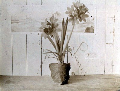 LH0963 Flowers - Amaryllis