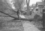 LH2045 Hurricane Hazel - Onlookers
