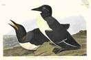 Audubon images on stamps