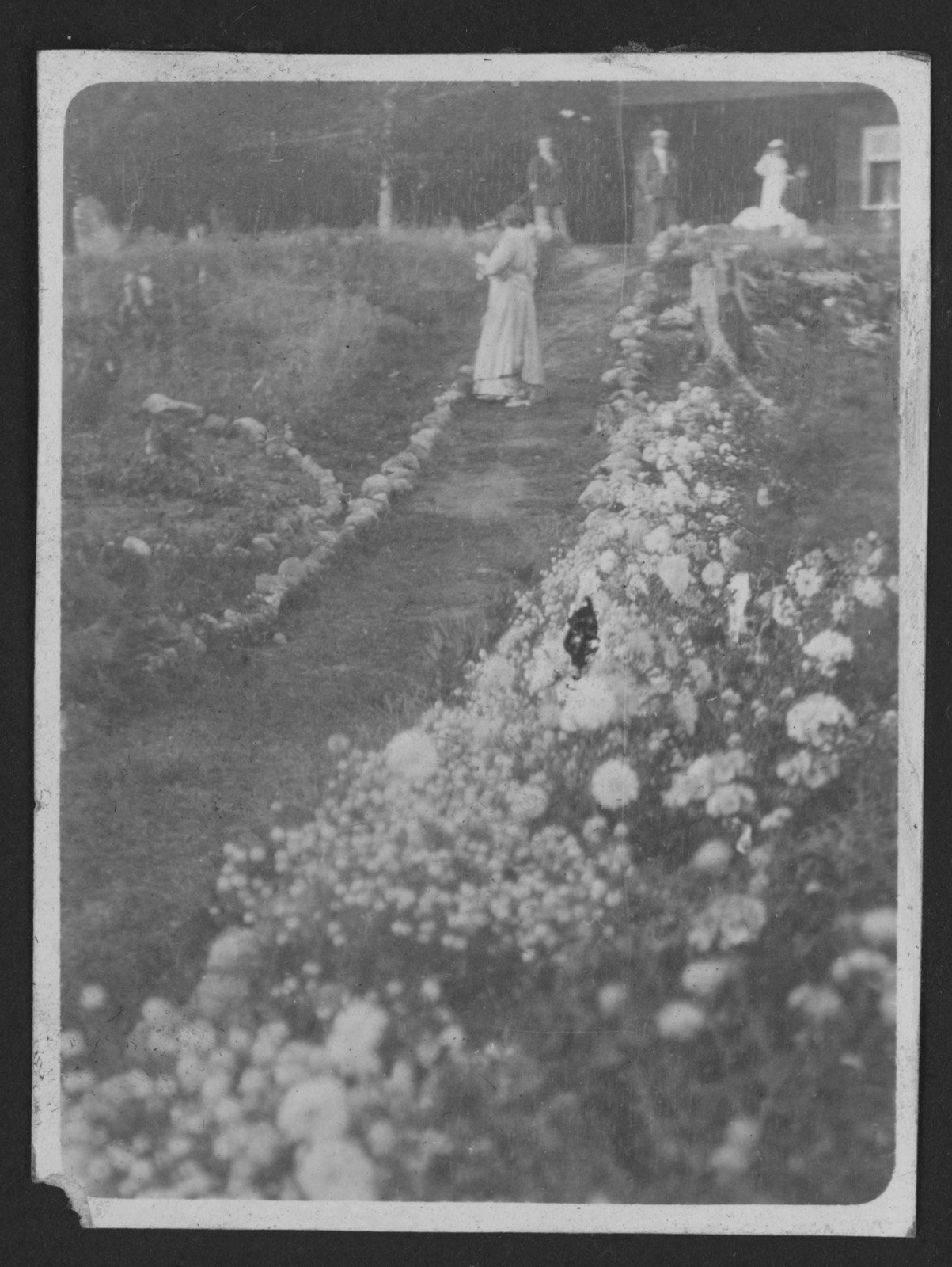 Gardens at main bungalow at Fettercairn