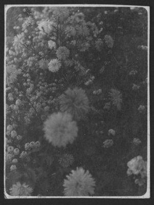 Flowers from garden at Fettercairn