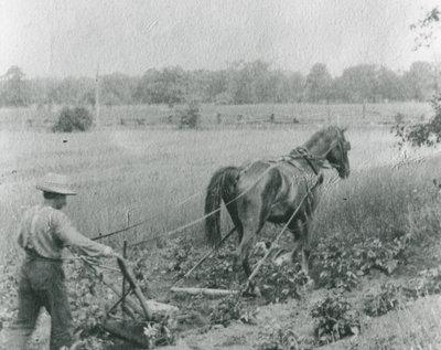 Charles Guttridge Ploughing