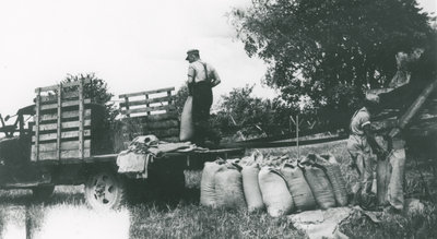 Byron and John Myers bagging grain after threshing