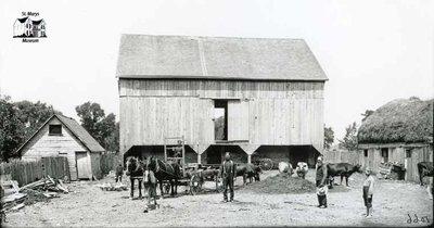 Barnyard Scene, St. Marys Area, c. 1902-1906