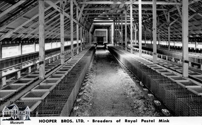 Hooper Bros. Ltd., St. Marys