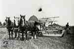 Three horse team pulling a binder