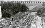 Firholm vegetable garden