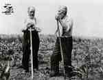 Two elderly men resting on hoes in field of young corn