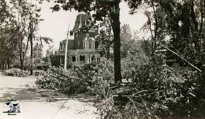 Fallen trees by Ercildoune, 1933