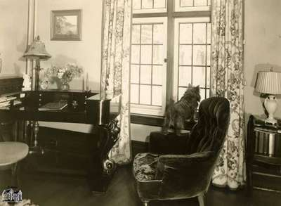 House interior, dog looking out window