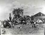 Threshing scene at McFarlane's at Cherry Grove, 1900