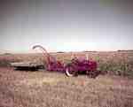 Harvesting, Morden, MB