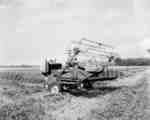 Windrowing with an IHC Self-propelled windrower, model 165, in St. Catharines, Ontario.