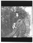 Portrait of John Connon, as a young man, with a dog, by a tree stump.