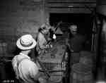 Men Sorting Potatoes