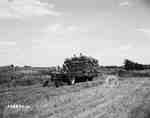 Threshing, Lambeth, ON