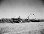 Harvesting, Morden, MB (1953)