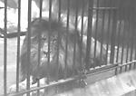 RIVERDALE PARK; ZOO, lion.