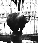 RIVERDALE PARK; ZOO, bear (brown).