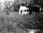 Townsend Family -- Miss Emma Townsend with her pets at Oaklands