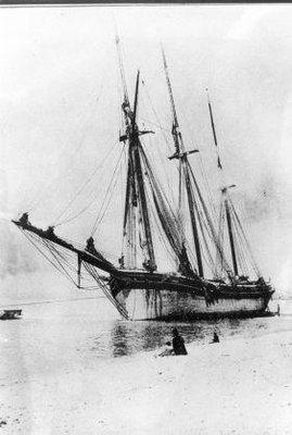 BARNES C C (1873)