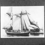 BELLE (1856)