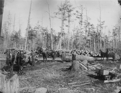 Horse Teams Hauling Logs