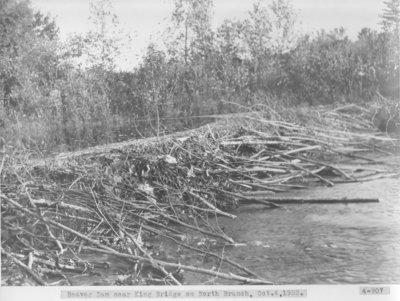 Beaver Dam on Thunder Bay River