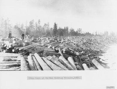 Ox-Bow Log Banks on Thunder Bay River