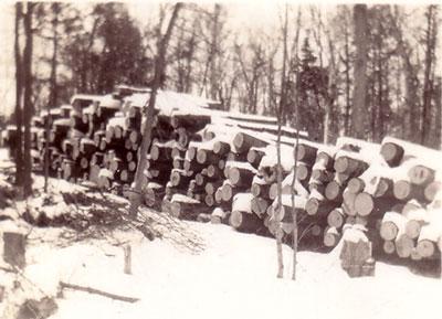 Stacks of Logs, Arthur and Harry Marsden's Farm, circa 1930