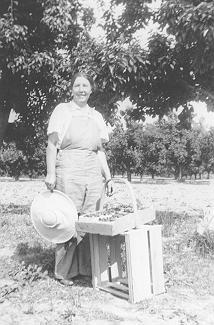 Mann Family -- Mrs. Henry Mann; strawberry-picking at Scheer farm, 1942