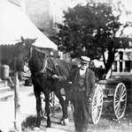A man holding the reins of a horse drawn carriage, Colborne