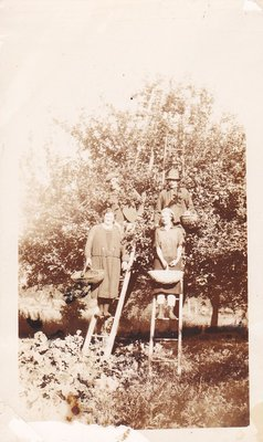 Exhibit photo from Apple Growing in Colborne by Joy Gifford - W.R. Scott Orchard