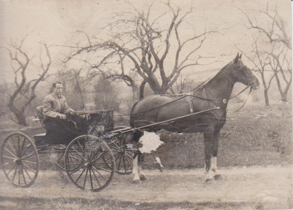 Man driving a horse carriage