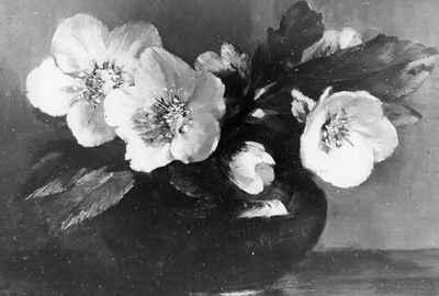 <b>Christmas Roses<b>