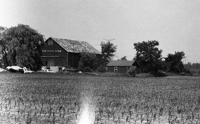 Cedar Drive Farm
