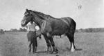 Horse on McCullough Farm