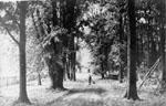 The fair grounds park 1910