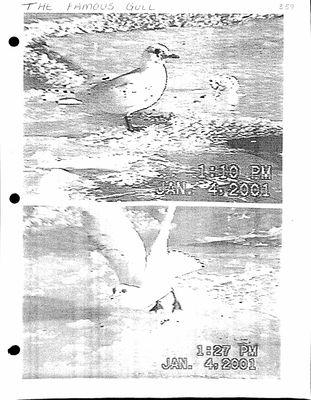 Amherst Island Tweedsmuir History, Volume 3 F3 1994-2003